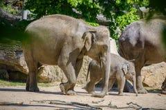 Éléphant et mère de chéri Photos stock