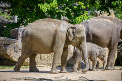 Éléphant et mère de chéri Images libres de droits