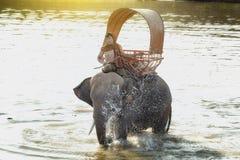 Éléphant et mahout Photographie stock