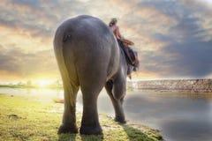 Éléphant et mahout Photographie stock libre de droits