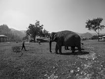 Éléphant et travailleur photo stock