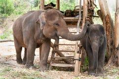 Éléphant et veau thaïlandais Thaïlande de mère photo stock