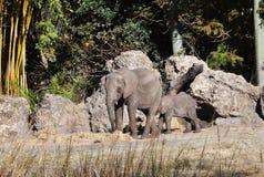 Éléphant femelle et éléphant de chéri Photographie stock