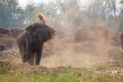 Éléphant grande Asie Image stock
