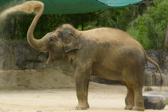 Éléphant heureux Photographie stock libre de droits