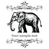 Éléphant. Illustration eps.10 de vecteur.   Photo stock