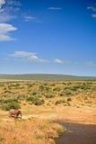 Éléphant marchant pour mettre en commun Image libre de droits