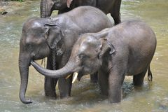 Éléphant mignon de l'Asie prenant un bain en rivière Images libres de droits