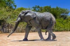 Éléphant, parc national de Kruger photographie stock libre de droits