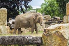 Éléphant parmi les roches et identifiez-vous que l'éléphant mettent dans un enclos Images stock