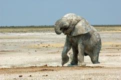Éléphant potable Image libre de droits