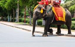 Éléphant pour des touristes Image libre de droits