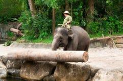 Éléphant poussant le logarithme naturel Photo libre de droits
