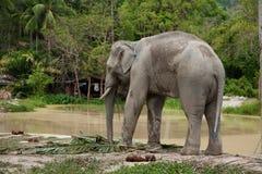 Éléphant près de lac Image stock