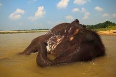 Éléphant s'étendant de son côté se baignant dans le fleuve Photos stock