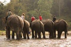 Éléphant se baignant en rivière photographie stock