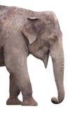 Éléphant sur le blanc Photographie stock
