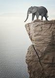 Éléphant sur le dessus Photos stock