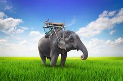 Éléphant thaïlandais sur le pré Images libres de droits