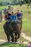 Éléphant, tour d'éléphant, animal Image stock