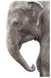Éléphant très vieil Photo libre de droits