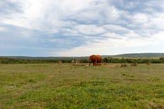 Éléphant, zèbre et phacochère recueillant à l'abreuvoir photographie stock libre de droits