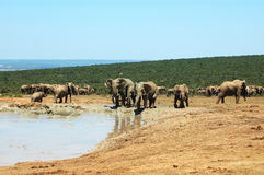 Éléphants photographie stock libre de droits