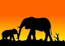 Éléphants Images libres de droits