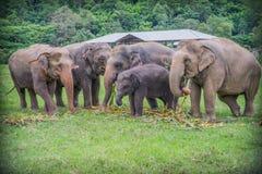éléphants Photo stock