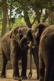 éléphants Image stock