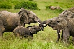 éléphants photos stock