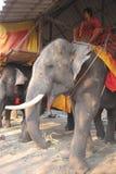 Éléphants asiatiques Images libres de droits