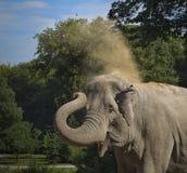 Éléphants asiatiques Image stock