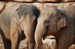 éléphants asiatiques deux Image stock