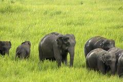 Éléphants Asie Photos libres de droits