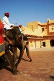 Éléphants au fort ambre Photographie stock