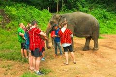 Éléphants d'alimentation de touristes Image libre de droits
