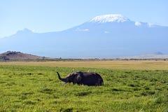 Éléphants d'Amboseli Image libre de droits