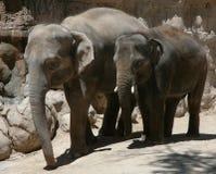 Éléphants d'Asie Photos libres de droits