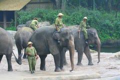 Éléphants d'Asie Images stock