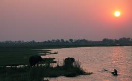 Éléphants dans la façade d'une rivière de Chobe au coucher du soleil Image stock