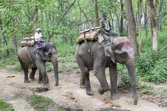 Éléphants dans la jungle images libres de droits