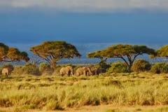Éléphants dans le beau paysage Image stock