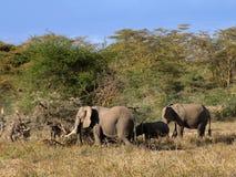 Éléphants dans le masai Mara Photographie stock