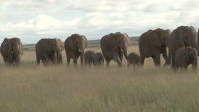 Éléphants dans le wildeness banque de vidéos