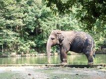 Éléphants dans le ZOO images libres de droits