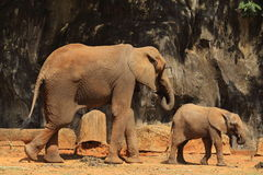 Éléphants dans le zoo image stock