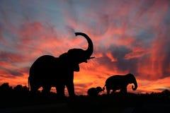 Éléphants dans un coucher du soleil de Serengety Photographie stock