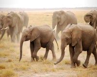 Éléphants de bébé Photos libres de droits