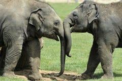 Éléphants de chéri saluant Images stock